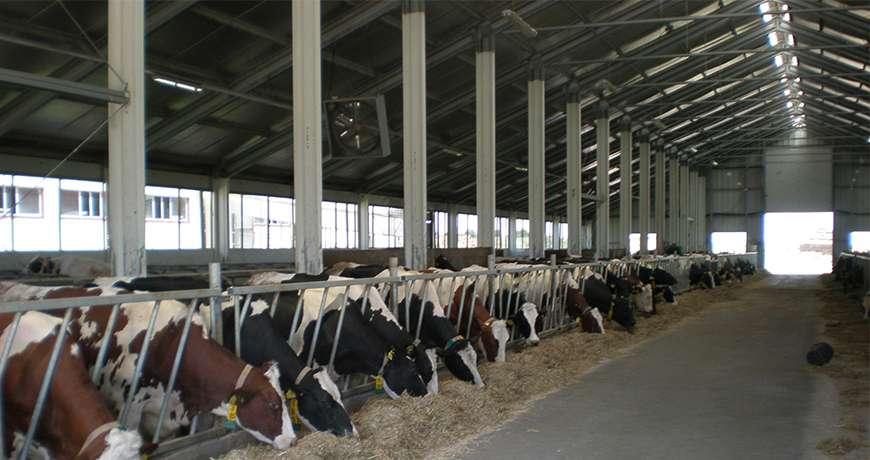 hale pentru ferme zootehnice