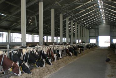 hale metalice - ferma de vaci