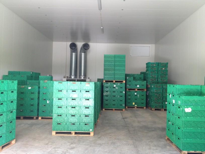 soluții de depozitare a legumelor