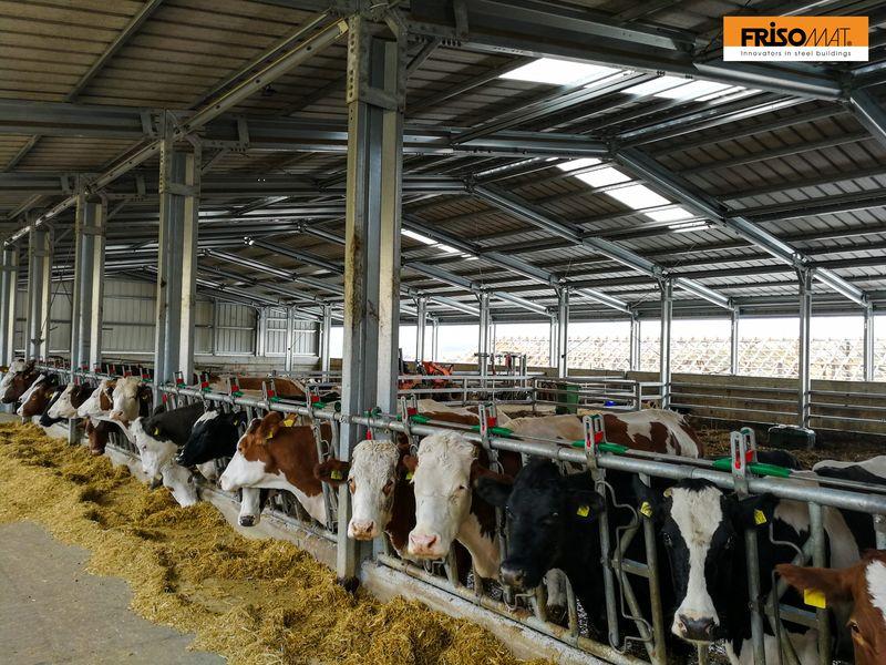 acoperis ferma vaci frisomat transagape