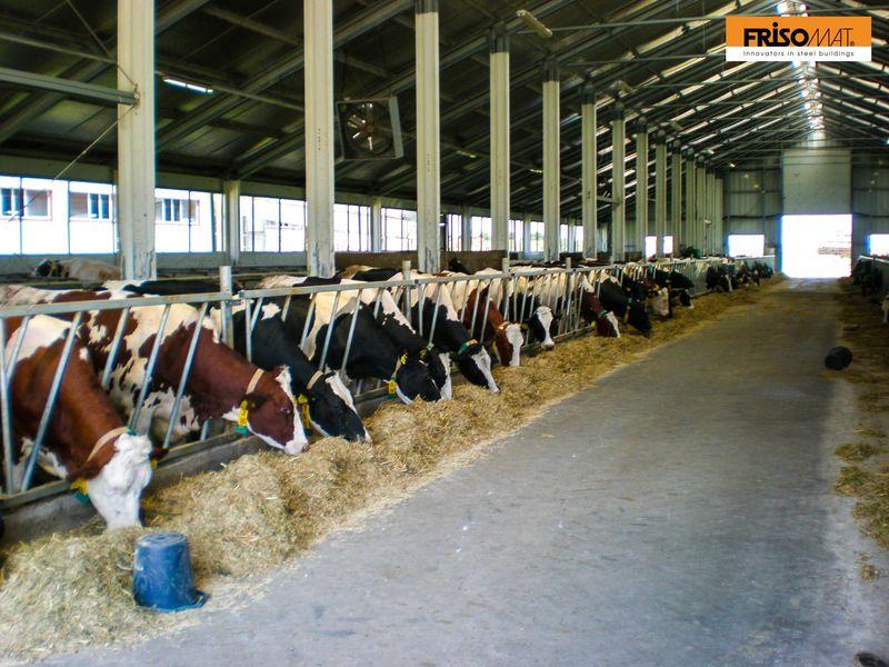 ferme vaci interior alee furajare frisomat bulgaria